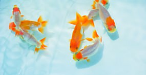 魚の壁紙#44サムネイル