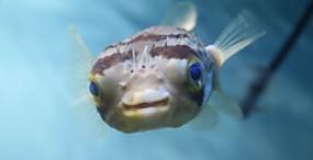 魚の壁紙#46サムネイル