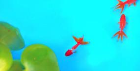魚の壁紙#48サムネイル