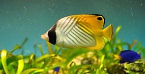 魚の壁紙#51サムネイル