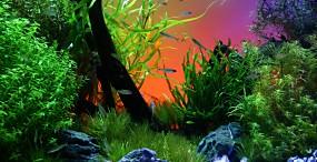 魚の壁紙#57サムネイル
