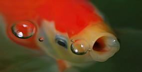 魚の壁紙#65サムネイル