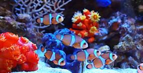 魚の壁紙#66サムネイル