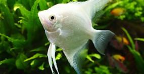 魚の壁紙#67サムネイル
