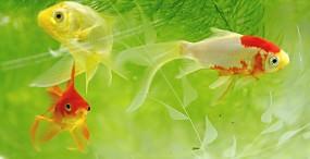 魚の壁紙#69サムネイル