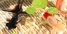 魚の壁紙#71サムネイル