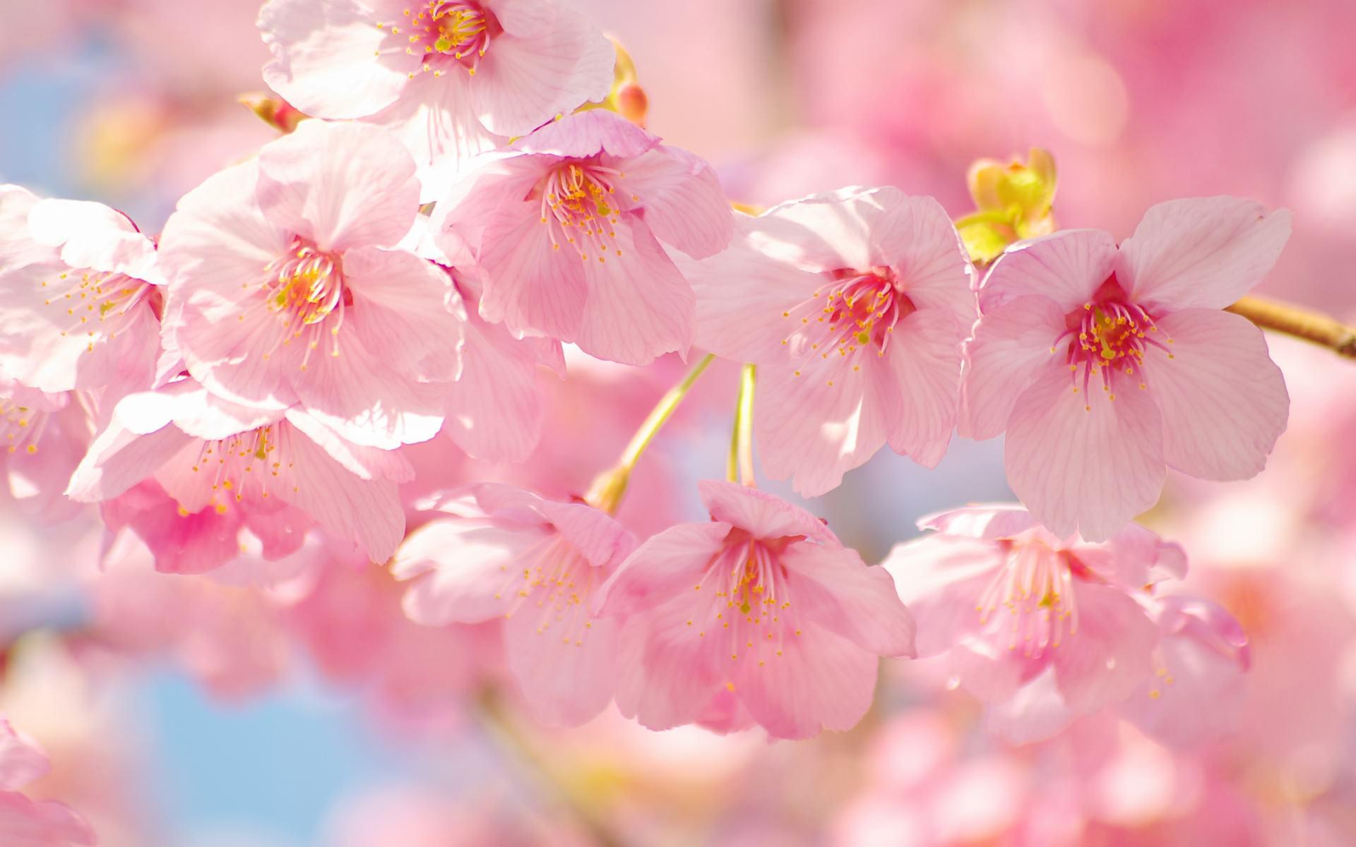 花の壁紙 19 10 1 スマホ Pc用壁紙 Wallpaper Box