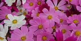 花の壁紙#1サムネイル
