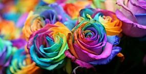 花の壁紙#100サムネイル