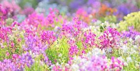 花の壁紙#102サムネイル