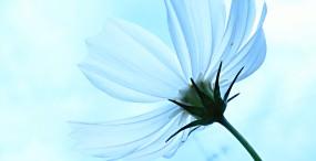 花の壁紙#105サムネイル