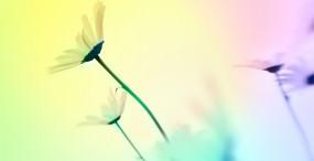 花の壁紙#110サムネイル