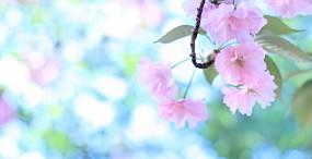 花の壁紙#114サムネイル