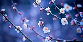 花の壁紙#118サムネイル