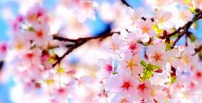 花の壁紙#120サムネイル