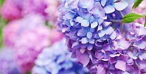 花の壁紙#124サムネイル