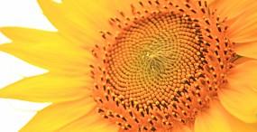 花の壁紙#125サムネイル