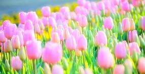 花の壁紙#127サムネイル