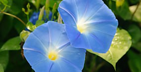 花の壁紙#129サムネイル