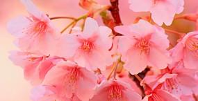 花の壁紙#130サムネイル