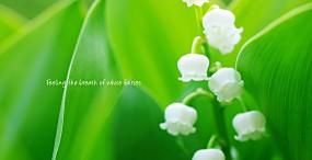 花の壁紙#131サムネイル