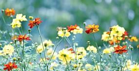 花の壁紙#132サムネイル