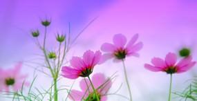 花の壁紙#134サムネイル