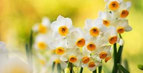 花の壁紙#135サムネイル
