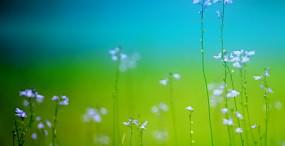 花の壁紙#140サムネイル