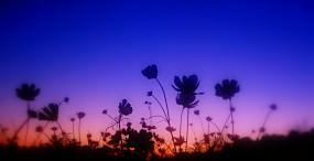 花の壁紙#141サムネイル