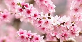 花の壁紙#142サムネイル