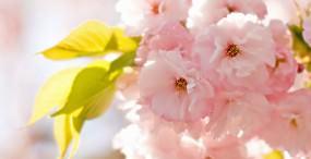 花の壁紙#143サムネイル