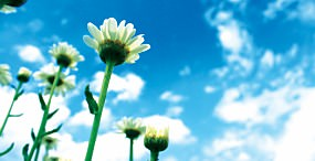 花の壁紙#144サムネイル