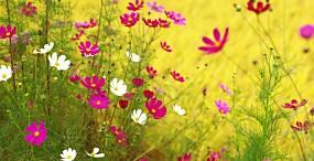 花の壁紙#145サムネイル