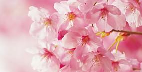 花の壁紙#15サムネイル