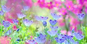 花の壁紙#18サムネイル