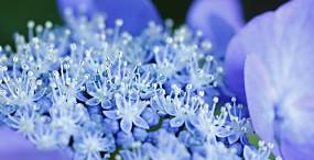 花の壁紙#21サムネイル