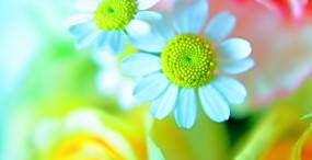 花の壁紙#23サムネイル