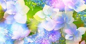 花の壁紙#27サムネイル