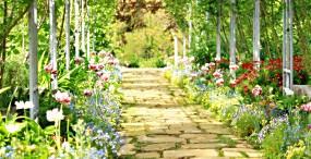 花の壁紙#28サムネイル