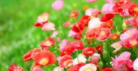 花の壁紙#29サムネイル
