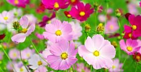 花の壁紙#3サムネイル