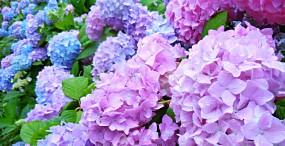 花の壁紙#30サムネイル