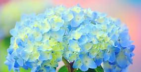 花の壁紙#31サムネイル