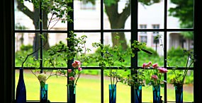 花の壁紙#32サムネイル