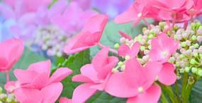 花の壁紙#35サムネイル