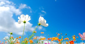 花の壁紙#39サムネイル