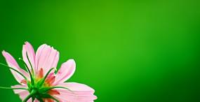 花の壁紙#4サムネイル