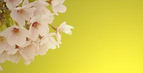 花の壁紙#42サムネイル