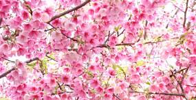 花の壁紙#43サムネイル